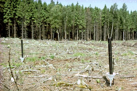 Bark beetle traps in clearcut
